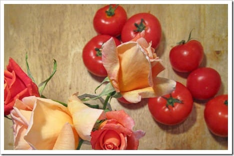 Roses-and-tomatoes.jpg